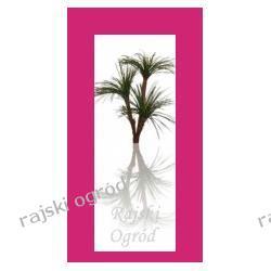 sztuczne drzewko JUKA X 3 sztuczny kwiat  TANIO!