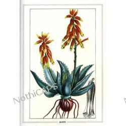 Ekstrakt Koncentratu Aloesowowego