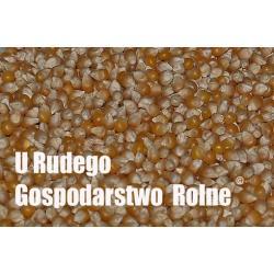 Kukurydza POPCORN DLA GOLEBI PAUPUG ryby  Karmy i smakołyki