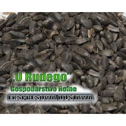Słonecznik czarny karma zimowa dla dzikich ptaków Karmy i smakołyki