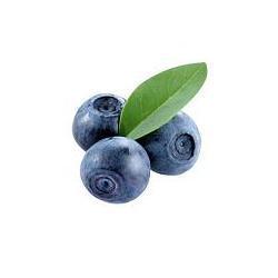 BORÓWKA AMERYKAŃSKA CHANDLER JAGODA Rośliny owocowe