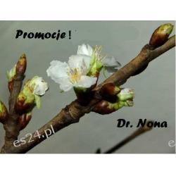 Promocja ! Dr Nona Czerwiec  2016