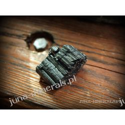 Kryształ czarnego turmalinu Skamieliny, minerały i muszle