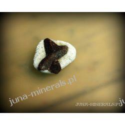 Staurolit - kamień krzyżowy Skamieliny, minerały i muszle