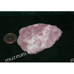Kwarc różowy Skamieliny, minerały i muszle