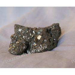 Piryt Skamieliny, minerały i muszle