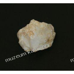Opal Skamieliny, minerały i muszle