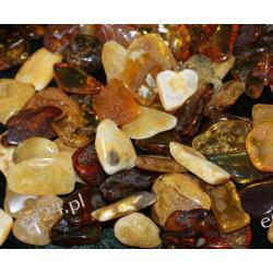 Bursztyn złocisty Skamieliny, minerały i muszle