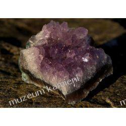 Ametyst szczotka krystaliczna MIN28 Skamieliny, minerały i muszle