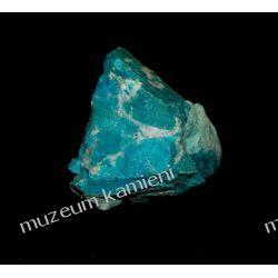Chryzokola MIN27 Skamieliny, minerały i muszle