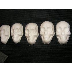 Czaszka,czaszki,5 sztuk