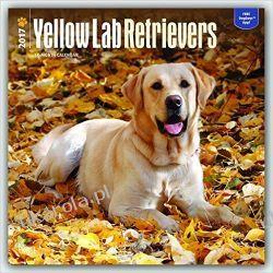 Kalendarz Labradory Yellow  Labrador Retrievers 2017 Wall calendar Pozostałe
