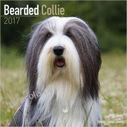 Kalendarz Bearded Collie Calendar 2017 Pozostałe