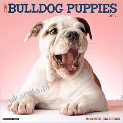 Kalendarz Bulldog Puppies 2017 Calendar Bulldogi Pozostałe
