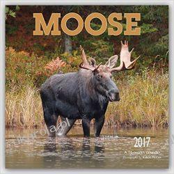 Kalendarz Łosie Moose 2017 Square Wall Calendar Elks