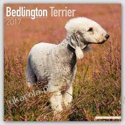 Kalendarz Bedlington Terrier Calendar 2017 Książki i Komiksy