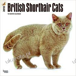 Kalendarz Koty British Shorthair Cats 2018 Wall Calendar Książki i Komiksy