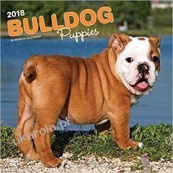 Kalendarz Bulldog Puppies 2018 Wall Calendar Książki i Komiksy