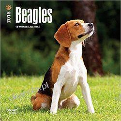 Kalendarz Beagles 2018 Calendar Książki i Komiksy