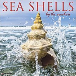 Kalendarz Muszle Sea Shells Calendar 2018 Muszelki Pozostałe