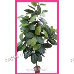 FIKUS sztuczne drzewko FICUS wysoka jakość  190cm SD/KN/DRD3045