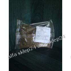 Marchew pastewna 0,1kg HPB LOBO