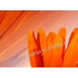 KACZE PIÓRA, KOLOROWE PIÓRKA  WINETOU 9-14 cm - pomarańczowy Szablony i maski