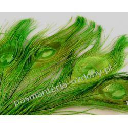 PAWIE  PIÓRA,  PIÓRKA 25-30cm - zielony