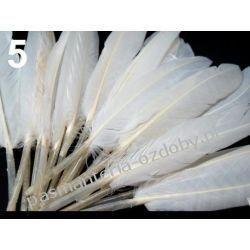 KACZE PIÓRA, KOLOROWE PIÓRKA  WINETOU 9-14 cm - białe Drewniane