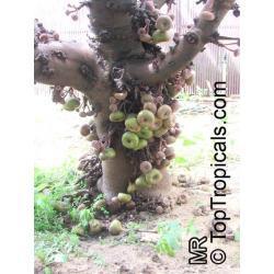 Słoniowe drzewo
