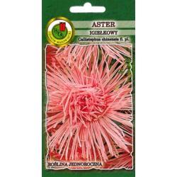 Nasiona 0.8 g  Aster Igiełkowy Różowy Jubileusz