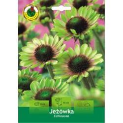 kłącze Jeżówka Echinacea green envy Okazja