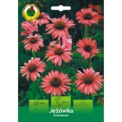 kłącze Jeżówka Echinacea MAGNUS Okazja