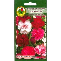 Nasiona 0,3g Goździk ogrodowy Chabaud nowość