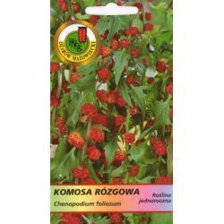 Nasiona 0,3 g Komosa rózgowa czerwona nowość