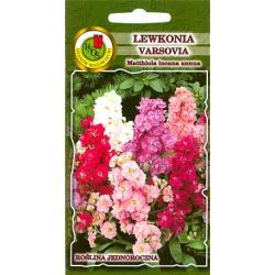 Nasiona 1 g Lewkonia Varsovia  Bona jasnożółty