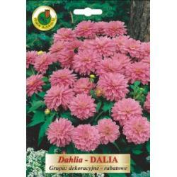 Cebulki 1 szt Dalia rabatowe różowe nowość