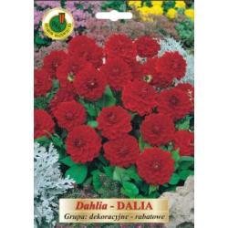 Cebulki 1 szt Dalia rabatowe czerwone nowość
