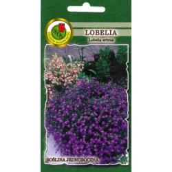 Nasiona 0,2 g Lobelia Mitternauchtsblau fioletowa