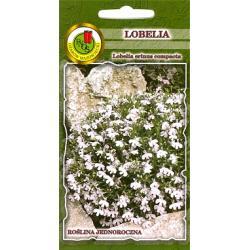 Nasiona 0,2 g Lobelia White Lady biała nowość