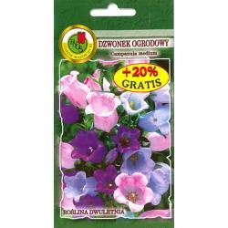 Nasiona Dzwonek ogrodowy różowy NOWOŚC