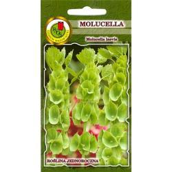 Nasiona 0,5 g Molucella (Dzwony irlandzkie) hit