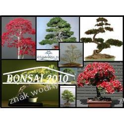 Zestaw nasion na bonsai 'BONSAI 2010'