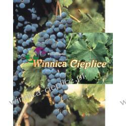 Sadzonki winorośli Negretto Winiarstwo