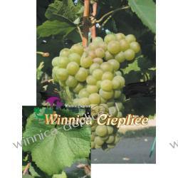 Sadzonka winorośli Pinot Bianco Przemysł spożywczy