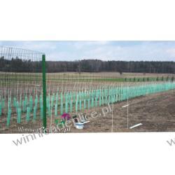 Nasadzenia winorośli maszynowo Rośliny owocowe