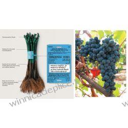 Sadzonka winorośli Cagnulari Rośliny owocowe