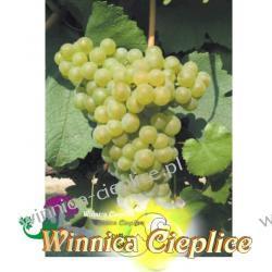Sadzonka winorośli Chardonnay winnica kpl Nasiona