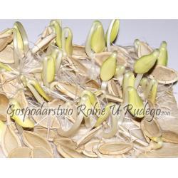 Dynia całe nasiona - karma dla gryzoni i papug Karmy i smakołyki