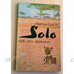 Solo dziki pies afrykański - Hugo van Lawick